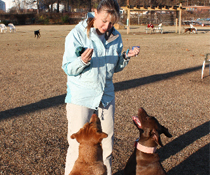 Joy The Dog Trainer In Session