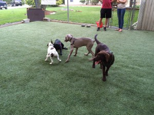 puppy class playtime