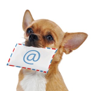 Red chihuahua dog with post envelope and icon e-mail isolated on white background. Closeup.