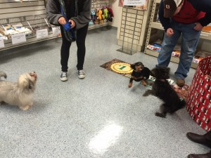 small-dog puppy class